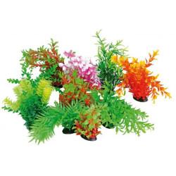 Rastlinka Tropical 22-25cm