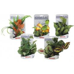 Rastlinka Wonder 15-25cm